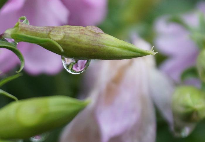 水滴・・2_d0162994_06035142.jpg