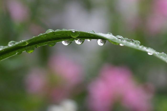 水滴・・2_d0162994_06040321.jpg