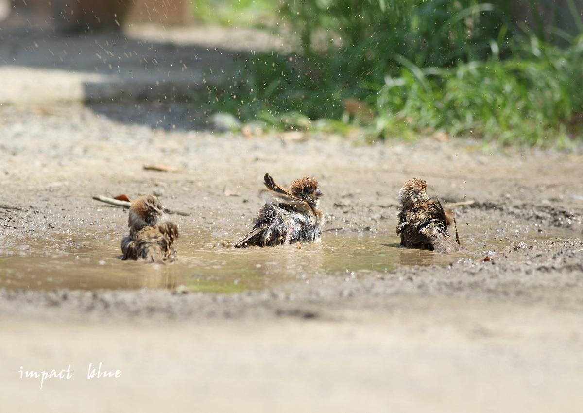 河川敷公園の夏(^^)/_a0355908_15053242.jpg