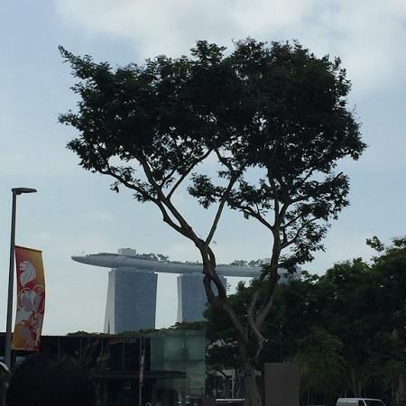 シンガポール旅行記 Day1&2_b0114515_21484518.jpg