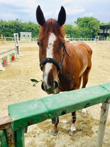 新馬の改名について_f0161323_16410007.jpeg