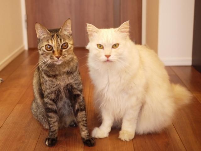 猫のお留守番 天ちゃん麦くん茶くん〇くんAoiちゃん編。_a0143140_21492033.jpg