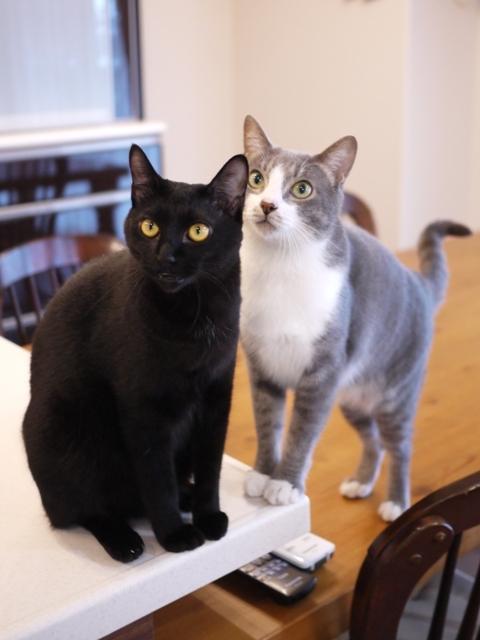 猫のお留守番 天ちゃん麦くん茶くん〇くんAoiちゃん編。_a0143140_21494326.jpg