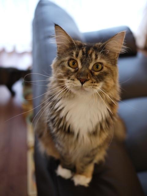 猫のお留守番 天ちゃん麦くん茶くん〇くんAoiちゃん編。_a0143140_21504547.jpg