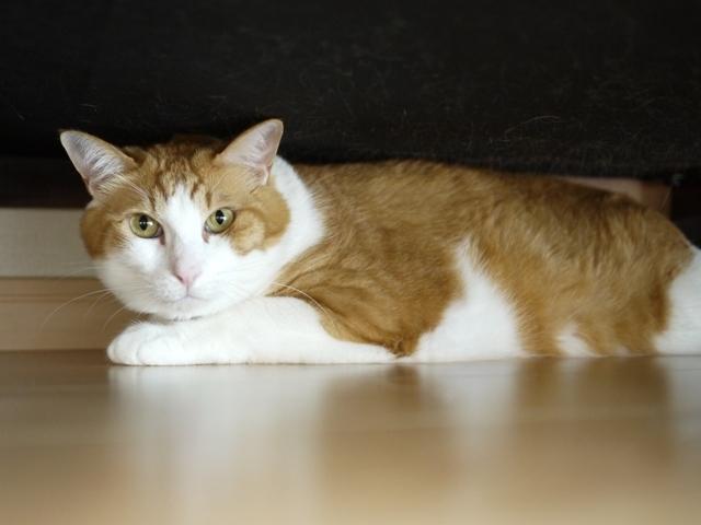猫のお留守番 あずきくん編。_a0143140_21552657.jpg