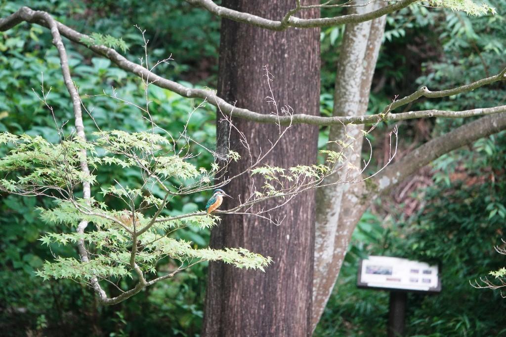 野鳥トレ 177 神戸森林植物園_b0227552_18562620.jpg