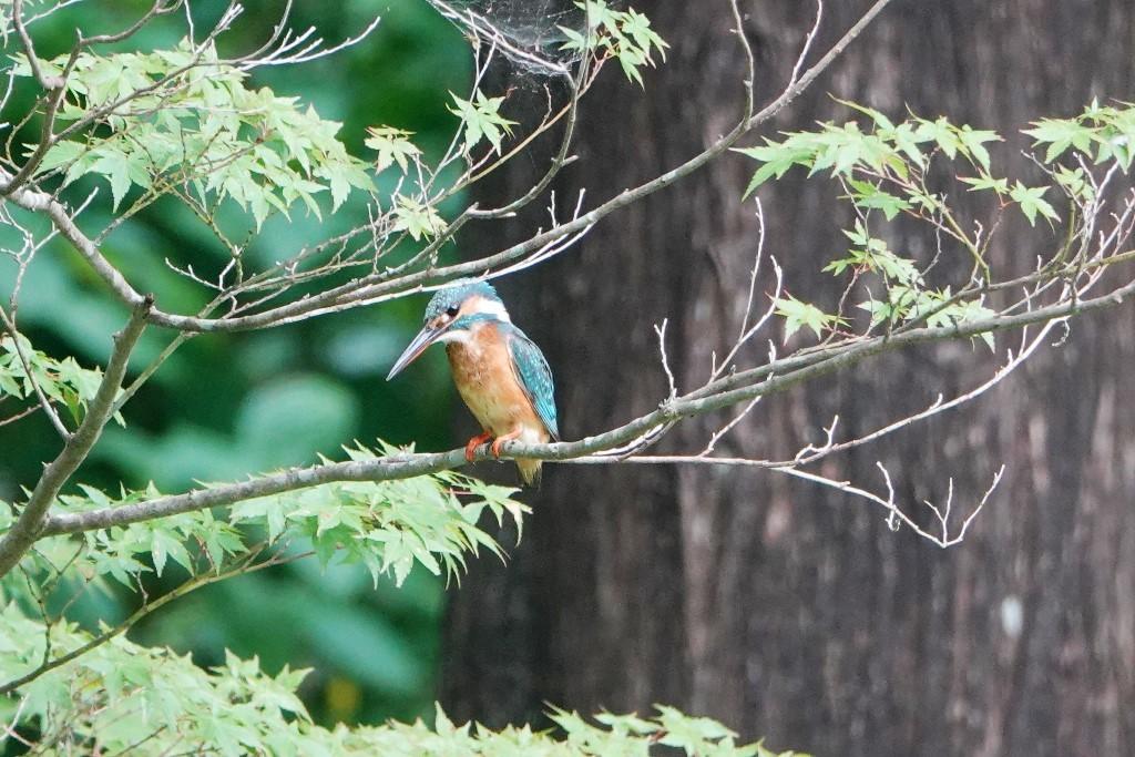野鳥トレ 177 神戸森林植物園_b0227552_18563791.jpg