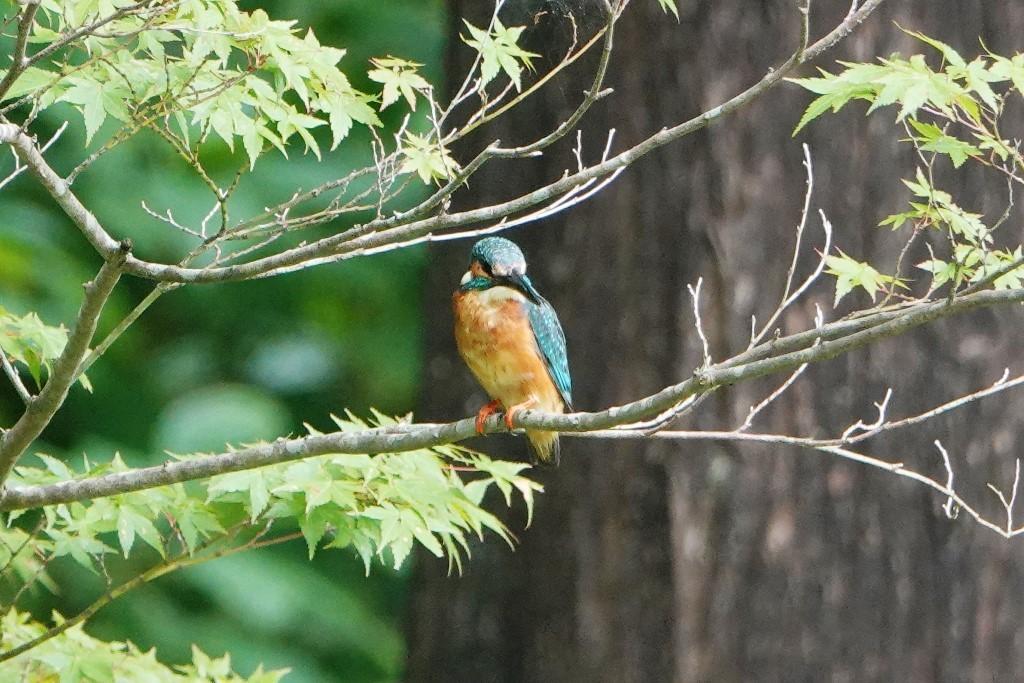 野鳥トレ 177 神戸森林植物園_b0227552_18565027.jpg