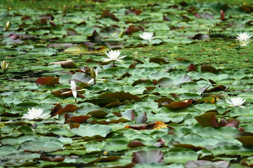 野鳥トレ 177 神戸森林植物園_b0227552_18570862.jpg