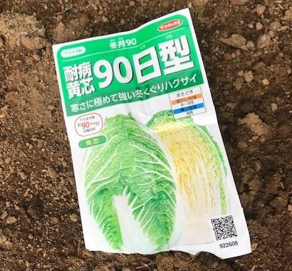 薩摩芋試し掘り、秋ジャガ植え付け、大根種蒔き8・18~19_c0014967_17314565.jpg
