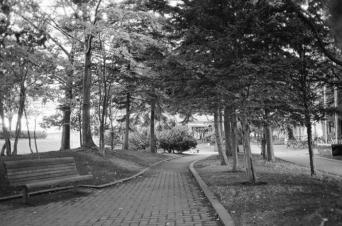 87年都市景観賞の道と今年亡くなった甥の追憶_c0182775_16323215.jpg