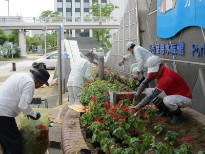 ガーデンふ頭総合案内所前花壇の植替えR1.8.19_d0338682_16233625.jpg