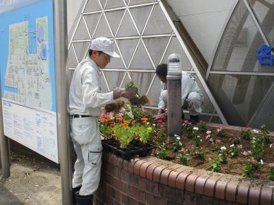 ガーデンふ頭総合案内所前花壇の植替えR1.8.19_d0338682_16301566.jpg