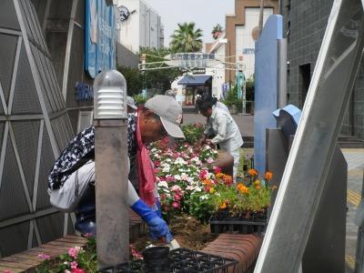 ガーデンふ頭総合案内所前花壇の植替えR1.8.19_d0338682_16303366.jpg