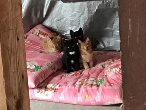 アビーという野良猫 〜 ある朝_c0027188_20080459.jpeg