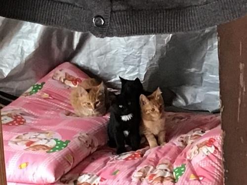 アビーという野良猫 〜 ある朝_c0027188_20082047.jpeg
