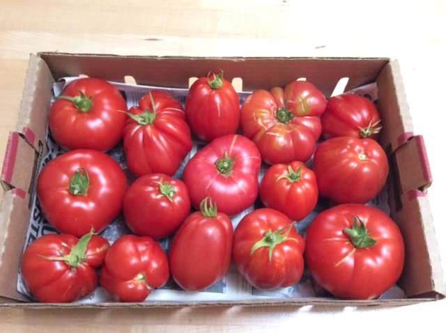 トマトの季節_a0331910_11404994.jpg
