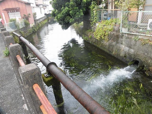 この時期に最も伸びる水草! 町内によって人数の確保が大変な田宿川の川そうじ_f0141310_07164308.jpg