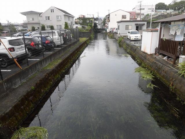 この時期に最も伸びる水草! 町内によって人数の確保が大変な田宿川の川そうじ_f0141310_07170149.jpg