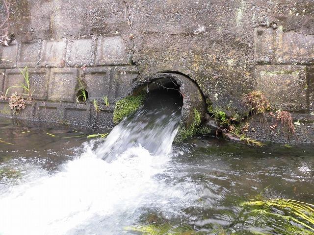 この時期に最も伸びる水草! 町内によって人数の確保が大変な田宿川の川そうじ_f0141310_07171395.jpg
