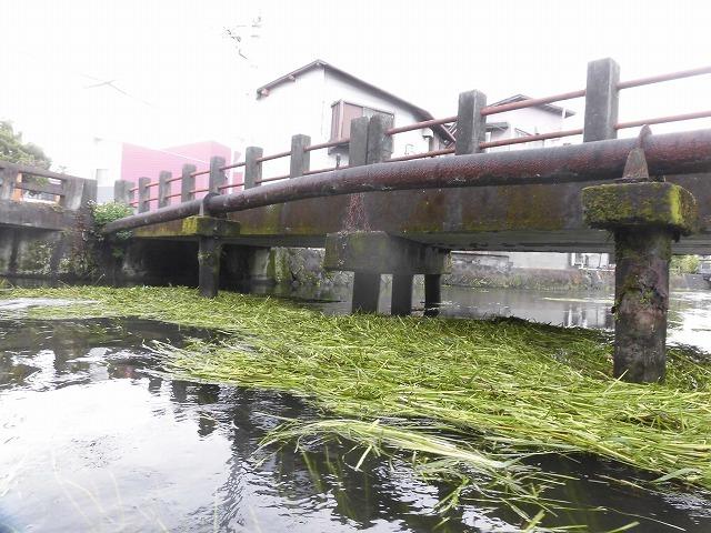この時期に最も伸びる水草! 町内によって人数の確保が大変な田宿川の川そうじ_f0141310_07171907.jpg