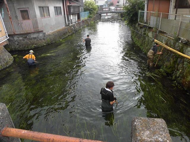 この時期に最も伸びる水草! 町内によって人数の確保が大変な田宿川の川そうじ_f0141310_07173636.jpg