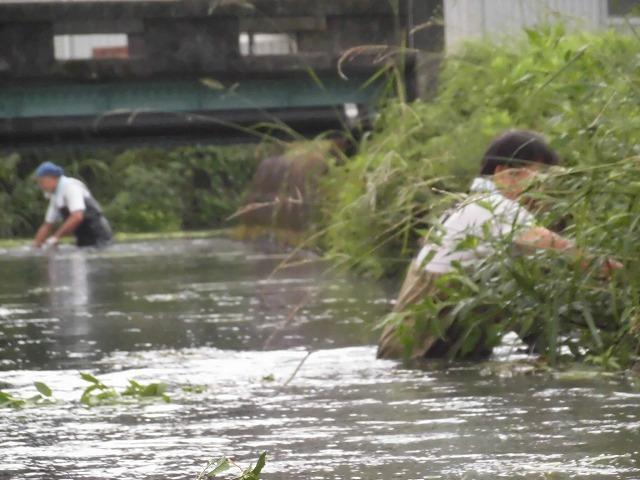この時期に最も伸びる水草! 町内によって人数の確保が大変な田宿川の川そうじ_f0141310_07174666.jpg