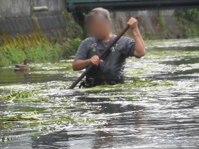 この時期に最も伸びる水草! 町内によって人数の確保が大変な田宿川の川そうじ_f0141310_07175466.jpg