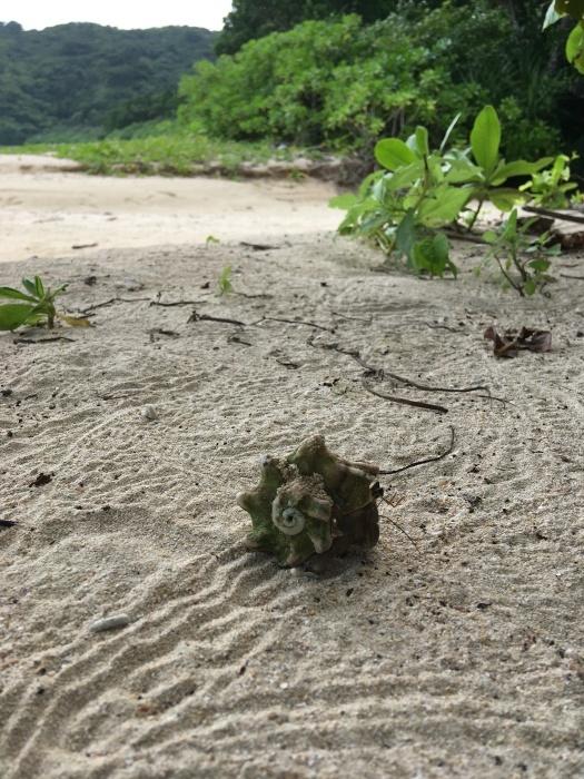 イダの浜2019_e0155231_01474980.jpeg