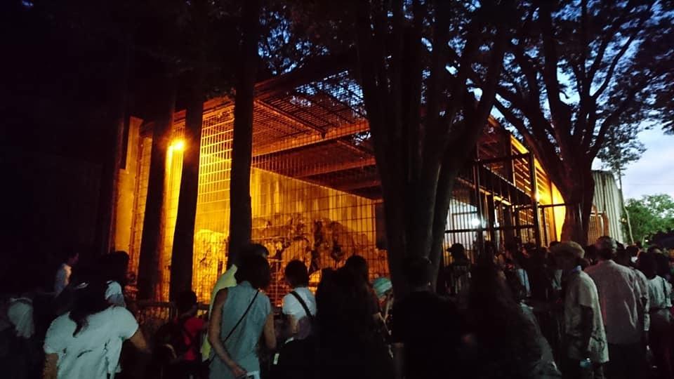 東山動植物園ナイトズー2019 最終日!_f0373339_13551367.jpg