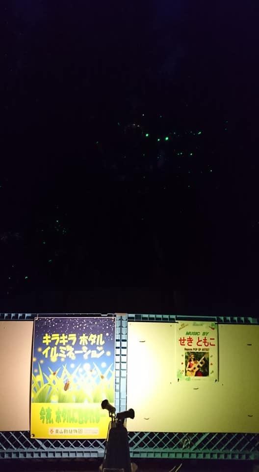 東山動植物園ナイトズー2019 最終日!_f0373339_14033776.jpg