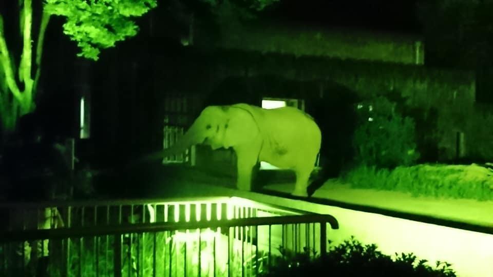 東山動植物園ナイトズー2019 最終日!_f0373339_14083054.jpg