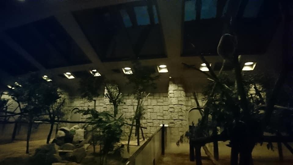 東山動植物園ナイトズー2019 最終日!_f0373339_14200508.jpg