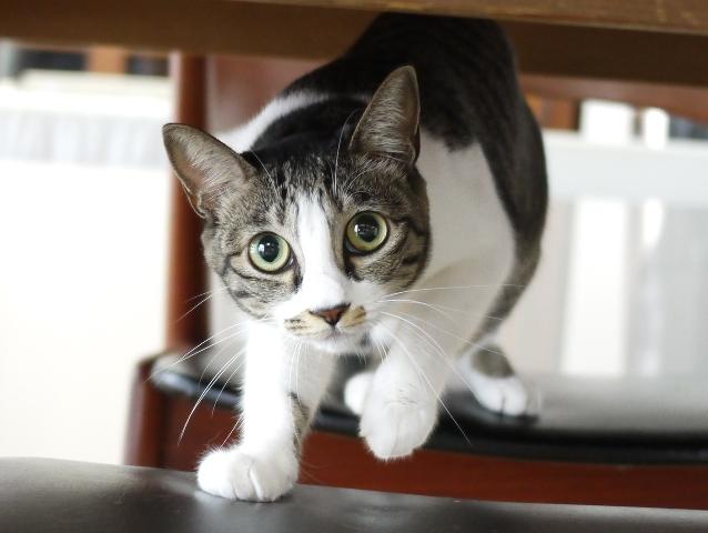 猫のお留守番 ぎんちゃん編。_a0143140_22532248.jpg