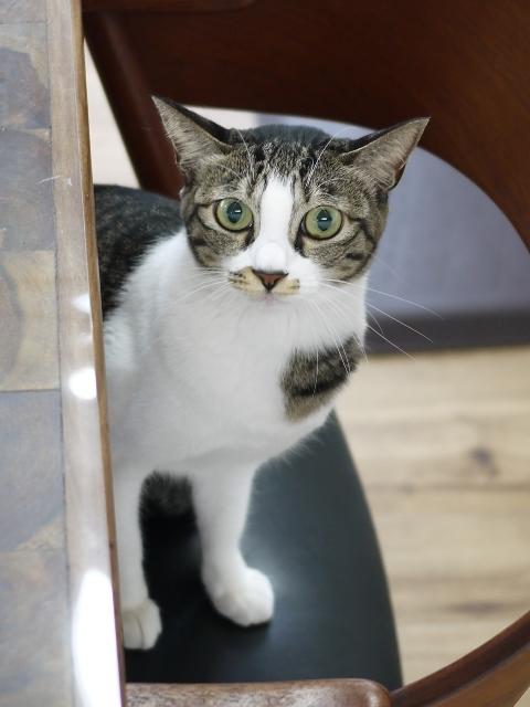 猫のお留守番 ぎんちゃん編。_a0143140_22544163.jpg