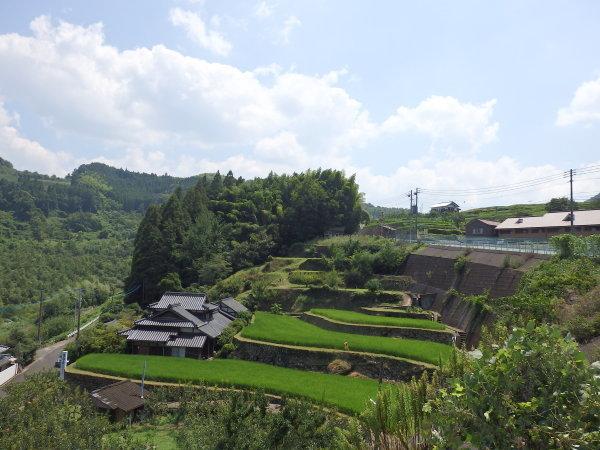 福岡県朝倉にて日本ミツバチの経過観察してきました_f0337554_11465103.jpg