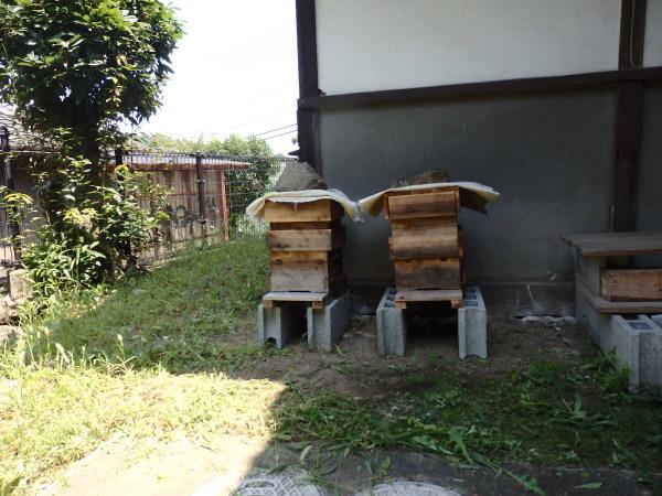 福岡県朝倉にて日本ミツバチの経過観察してきました_f0337554_11542627.jpg