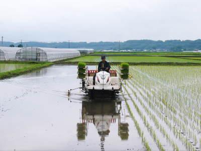 七城米 長尾農園 令和元年度のお米も美しく、元気に成長中!!平成30年度の『七城米』残りわずかです!_a0254656_17042948.jpg