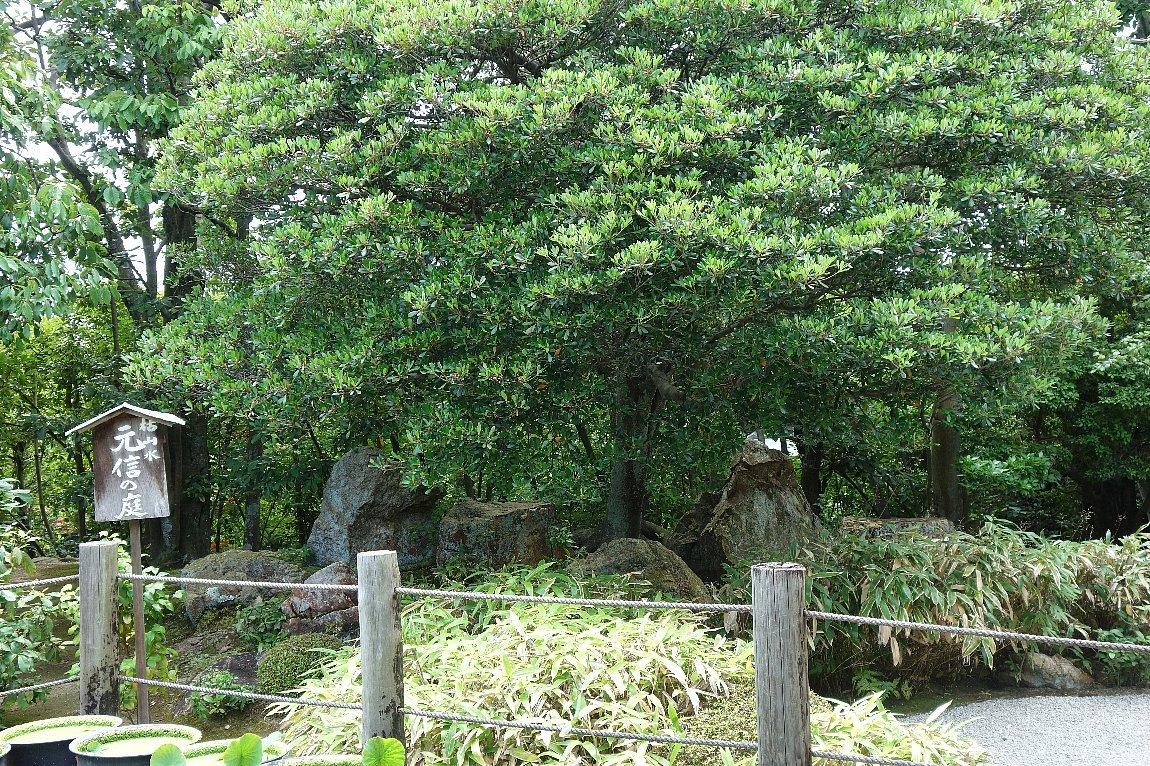 妙心寺 退蔵院(その2)元信の庭_c0112559_08284834.jpg