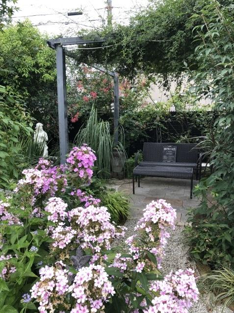 晩夏の庭「フロックス」「ラ・ローズ・ドゥ・モリナール」が繰り返し咲いています_a0243064_09141767.jpg
