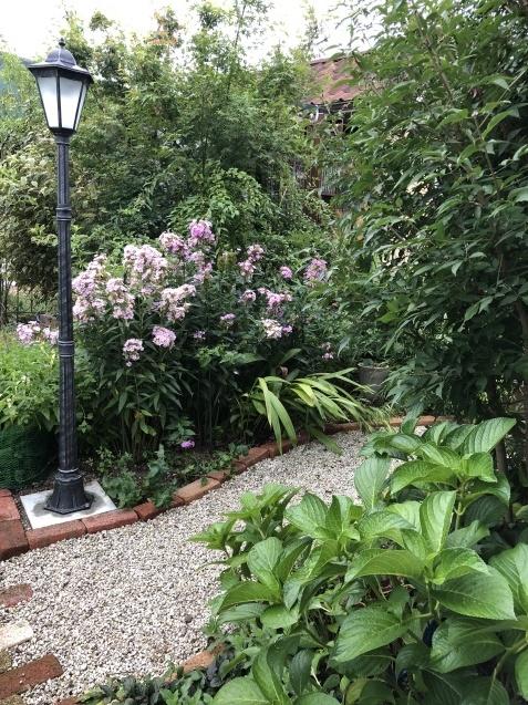 晩夏の庭「フロックス」「ラ・ローズ・ドゥ・モリナール」が繰り返し咲いています_a0243064_09163847.jpg