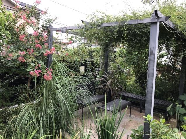 晩夏の庭「フロックス」「ラ・ローズ・ドゥ・モリナール」が繰り返し咲いています_a0243064_09175792.jpg