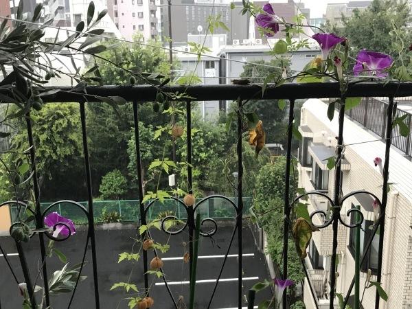 港区辺だけ集中豪雨、とレモンにはらぺこあおむし_e0397389_16231138.jpeg