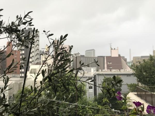港区辺だけ集中豪雨、とレモンにはらぺこあおむし_e0397389_16232390.jpeg