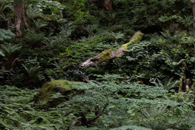 樹々の息吹と自然界の残酷_a0158797_19455948.jpg