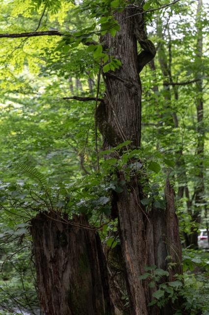 樹々の息吹と自然界の残酷_a0158797_19463426.jpg