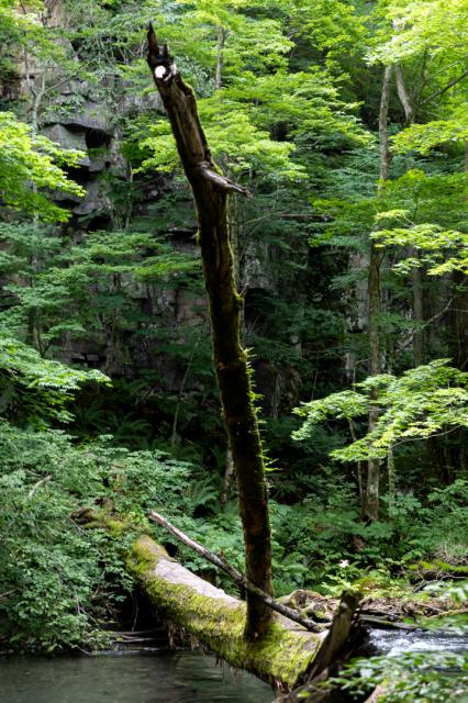 樹々の息吹と自然界の残酷_a0158797_19472512.jpg