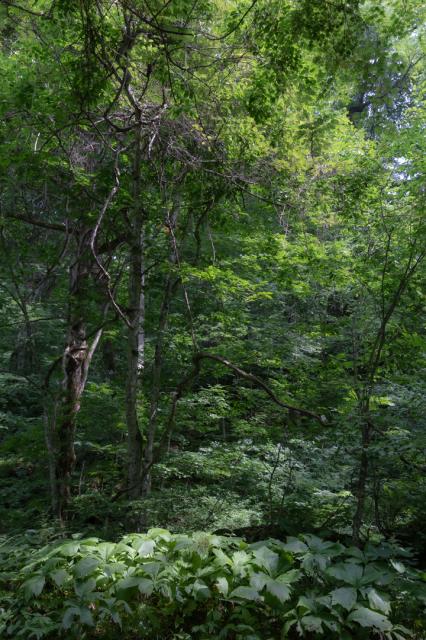 樹々の息吹と自然界の残酷_a0158797_19520510.jpg