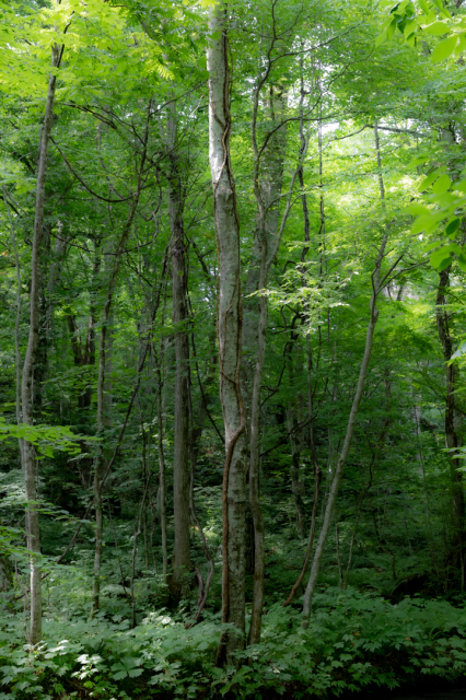 樹々の息吹と自然界の残酷_a0158797_19531366.jpg