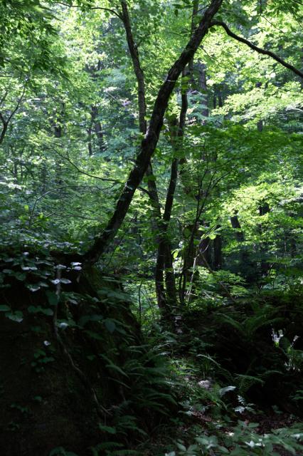 樹々の息吹と自然界の残酷_a0158797_19535611.jpg